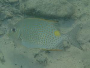 olympus tg-2 makro under vatten