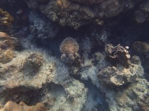 havssköldpadda - OLYMPUS DIGITAL CAMERA